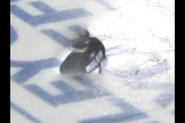 Somebody help Malone got stuck in the ice!