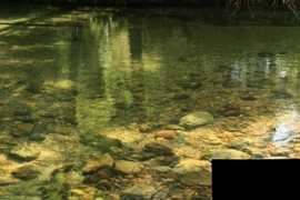 Macroinvertebrate habitat