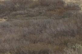 Salix bushes