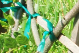 llaços verds
