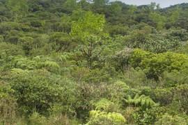 Emergent Lapalapa