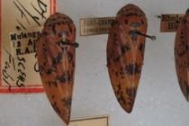 188841-210x140