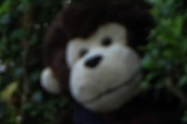 Cuddly monkey on holiday again!