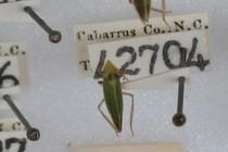 171717-210x140