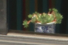 small Potted plant in window