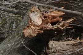 Broken Branch
