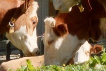 184111-210x140