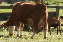 186155-210x140