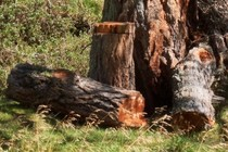186625-210x140