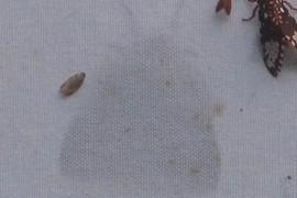 Ghost Moth!!