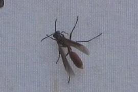 Formicidae?