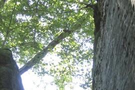 Tree= landmark