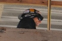 243569-210x140