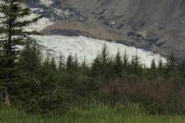 Terminus of Pederson Glacier
